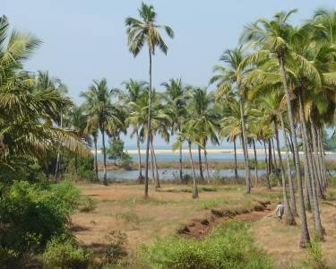 Cost of Living India Goa